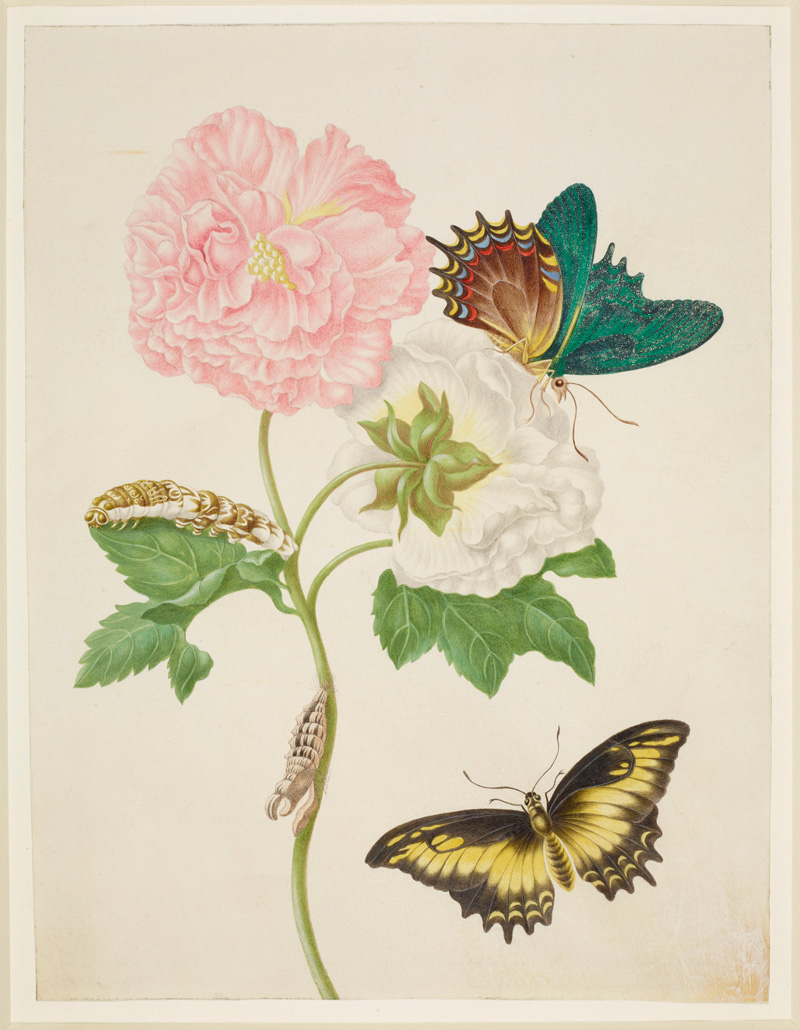 Maria Merian's Butterflies and watercolour class
